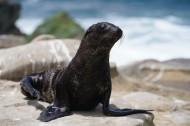 外表憨厚的海豹图片(7张)