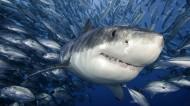 深海狂鲨图片(8张)