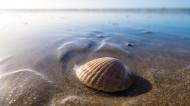 海边的贝壳图片(10张)