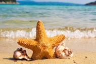 可爱的海星图片(10张)