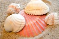 贝壳堆图片(8张)