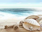 沙滩上的贝壳图片(21张)