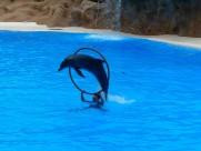 海豚表演图片(17张)