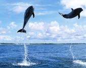 海豚图片(40张)