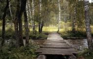 木质结构的桥图片(15张)