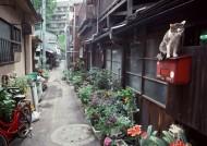 居民生活小巷特写图片(28张)