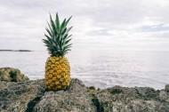 含有大量营养的菠萝图片(16张)