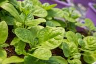 新鲜的有机蔬菜图片(9张)