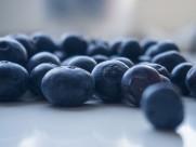 酸酸甜甜的蓝莓图片(22张)