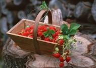 新鲜草莓图片(10张)