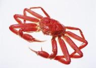 螃蟹图片(27张)