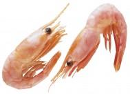 鲜肥味美的对虾图片(13张)