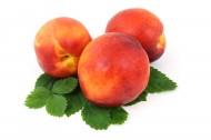诱人的桃子图片(10张)