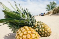 沙滩上的菠萝图片(10张)