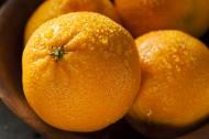 新鲜的桔子图片(7张)