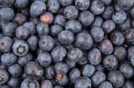 新鲜蓝莓图片(15张)