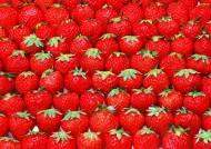 水果整齐排列背景图片(17张)