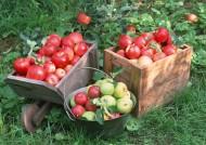 苹果图片(15张)