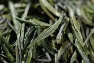深绿色竹叶青茶叶图片(10张)