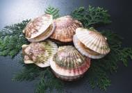 海鲜贝壳图片(24张)