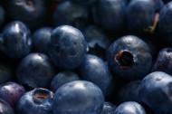 清香可口的蓝莓图片(10张)