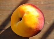 新鲜好吃的水蜜桃图片(22张)