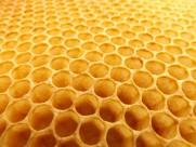 蜂巢蜂窝图片(10张)