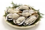 美味的海鲜生蚝图片(15张)