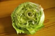 白菜卷心菜图片(15张)