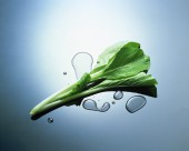 新鲜蔬菜食材图片(34张)