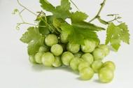 新鲜的绿葡萄图片(15张)