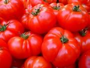 新鲜的西红柿图片(16张)