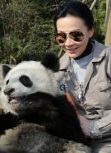 郭富城刘嘉玲探访大熊猫 亲密互动做慈善