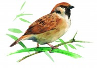 树枝上的小鸟彩绘图片(15张)