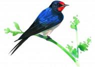 彩绘各种鸟类图片(19张)