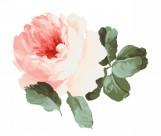 水墨花卉图片(235张)