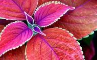 唯美植物图片(10张)