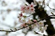 漂亮的桃花图片(14张)