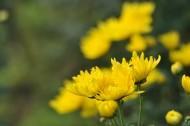 秋天花园里盛开的鲜花图片(16张)