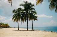 常绿乔木椰子树图片(11张)