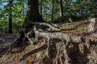 大树的根部图片(9张)