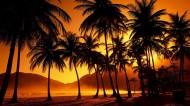 棕榈树图片(13张)