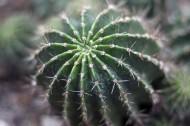耐旱的仙人掌图片(15张)