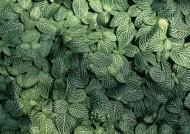 绿色植物背景图片(22张)