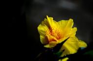 绿叶丛中的美人蕉图片(7张)