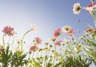 花朵里的蓝天图片(19张)