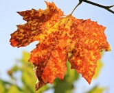 漂亮的树叶图片(10张)