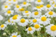 花丛中的花朵野花特写图片(15张)