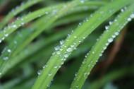 青草上面的露水图片(12张)