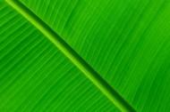 一大片绿叶的纹理图片(10张)